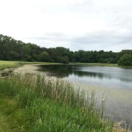 Pine Lake - Photo Credit: Village of University Park Official Website